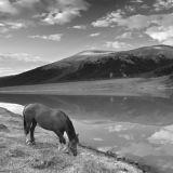 Grazing horse. Altai mountains.