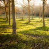 Tree shadows. Tuscany.
