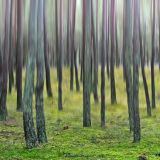 Defocused forest