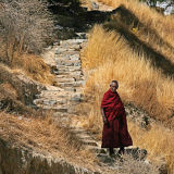 Lonely monk