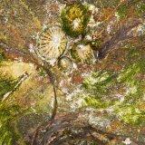Rock Surface Detail