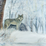 Snow Wolf 'Alert Stillness'