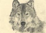 Wolf ally