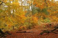 Autumn Colours 01