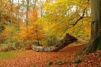 Autumn Colours 02