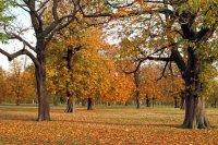 Autumn Colours 03