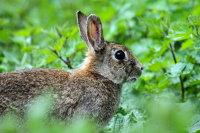 Rabbit 03