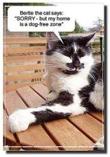 """Bertie the house cat says """"I'm sorry but my home is a dog-free zone"""" / Bertie le chat de la maison s'excuse mais les chiens ne sont pas les bienvenus chez lui!"""