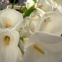 NY market lillies