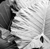 Eden Leaves