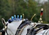 Show Heavy Horse