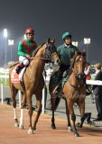 Animal Kingdom, Dubai World Cup 2013