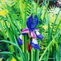 Iris 35.55 x 35cm, Giclee Print £90
