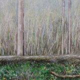Pale woods