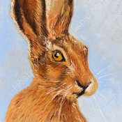 Mister Hare
