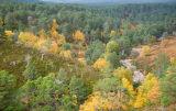 Rothiemurchus in autumn