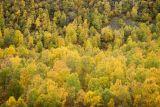 Birch forest, Scotland