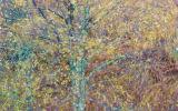 Birch tree in autumn storm, Argyll