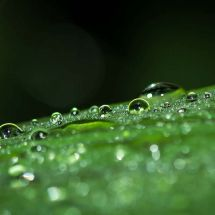 Raindrops on leaf #3