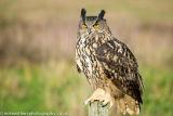 The Barn Owl Centre-3