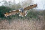 The Barn Owl Centre-5