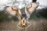 The Barn Owl Centre-6