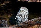 The Barn Owl Centre-8