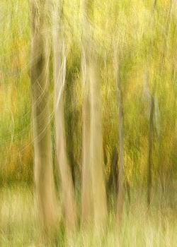 Gentle Tones of Autumn