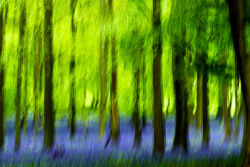 Ashridge Springtime