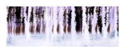 Woodland Negative