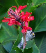 Bird n Flower