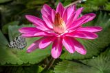 Lilly n Butterfly