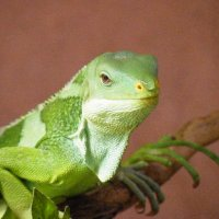 reptiles0012