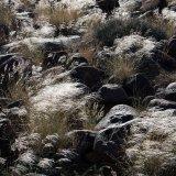 Namibia Grass