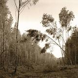 West Blean wood