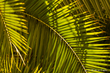 Green Palm Vegetation