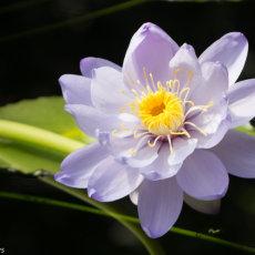 As seen at Kew Gardens